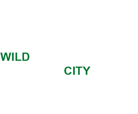 Your journey to the wild can now start from the city